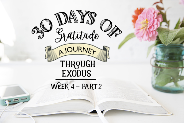 An Exciting New Study & Our Exodus Bible Study Conclusion